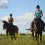 konie-15
