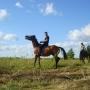 konie-17