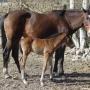 konie-2