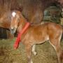 konie-27