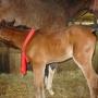 konie-28