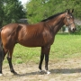 konie-53