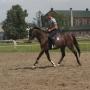 konie-57