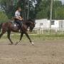 konie-58