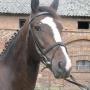 konie-61
