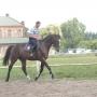 konie-62