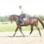konie-63