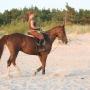 konie-71