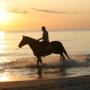 konie-73