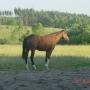 konie-76