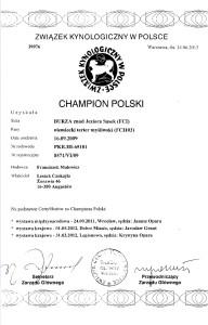 Certyfikat championatu Polski