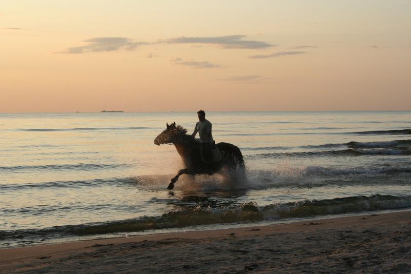konie (72)